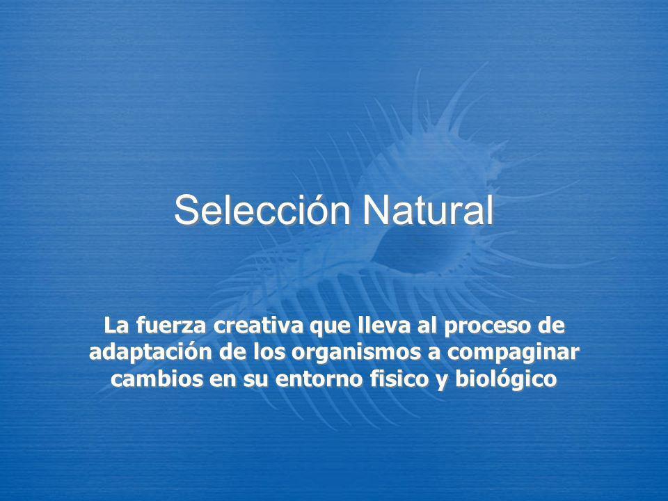 Selección NaturalLa fuerza creativa que lleva al proceso de adaptación de los organismos a compaginar cambios en su entorno fisico y biológico.