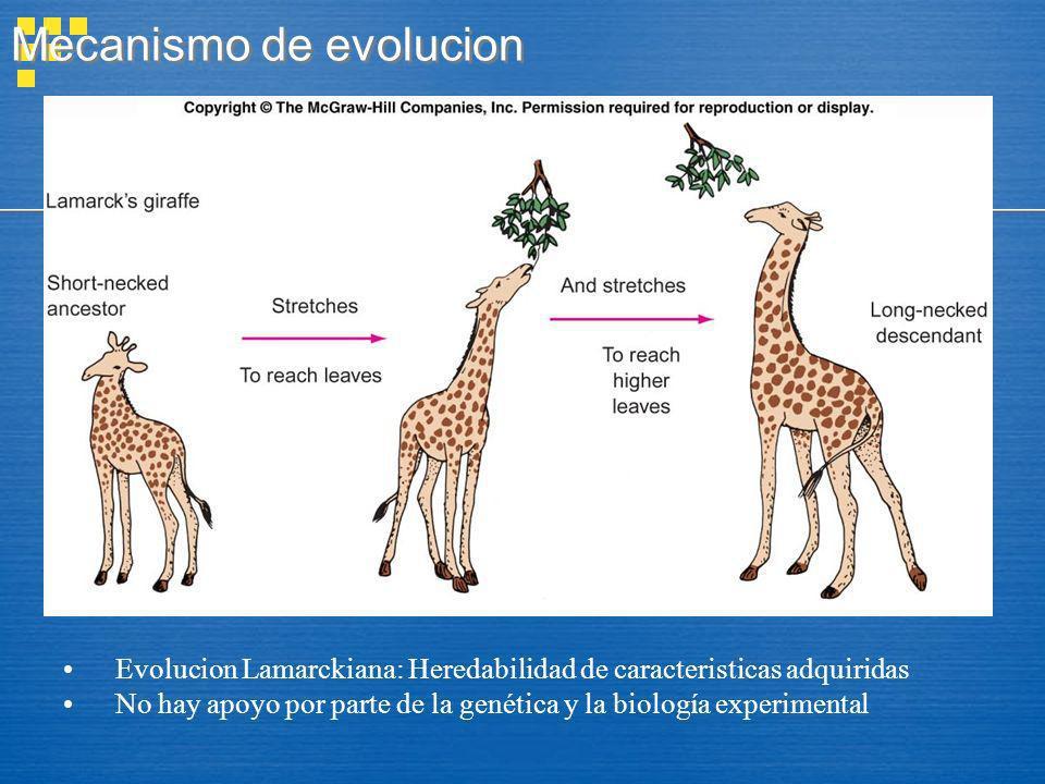 Mecanismo de evolucion