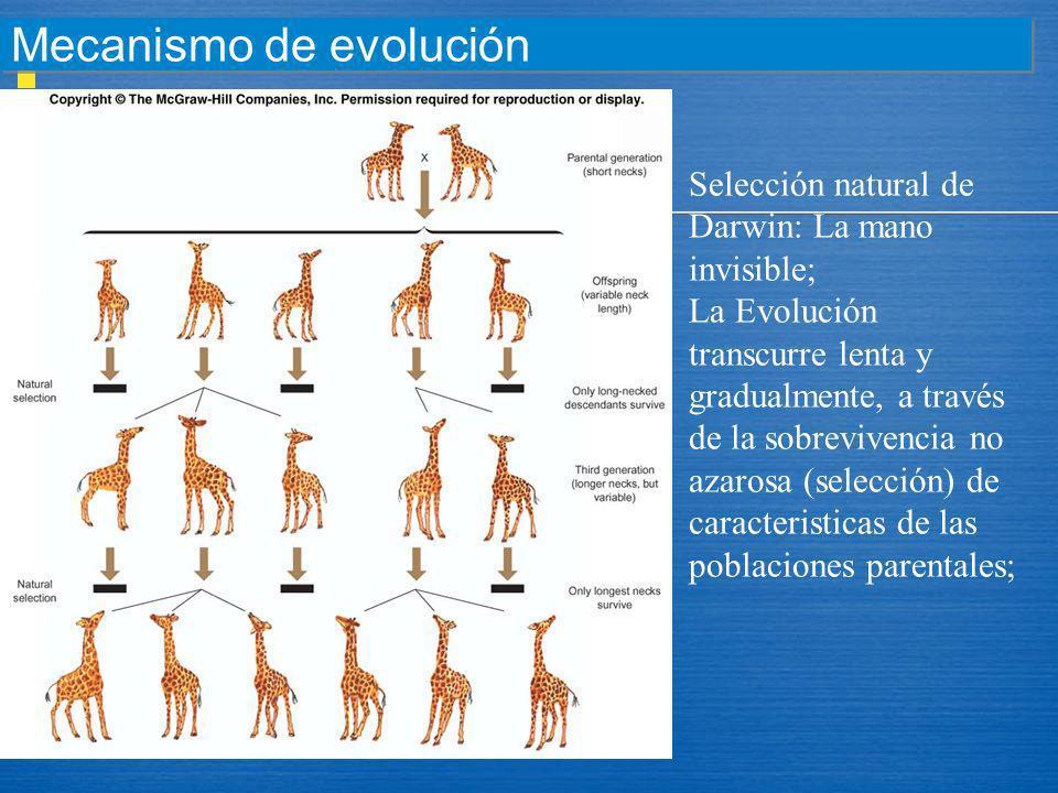 Mecanismo de evolución