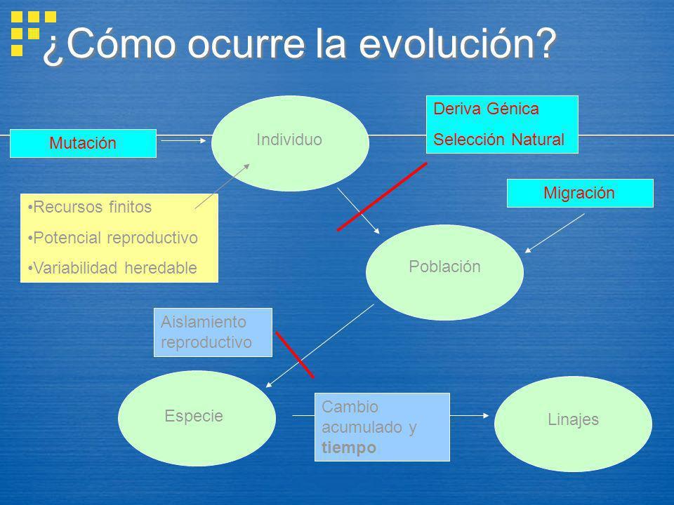 ¿Cómo ocurre la evolución