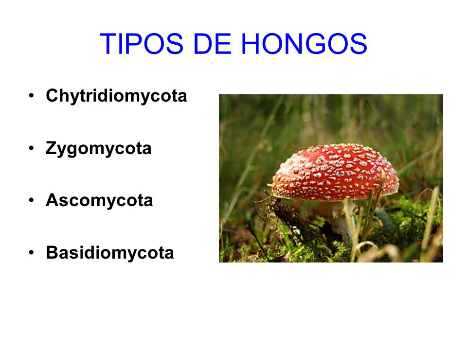 Hongos ppt video online descargar - Tipos de hongos en la pared ...