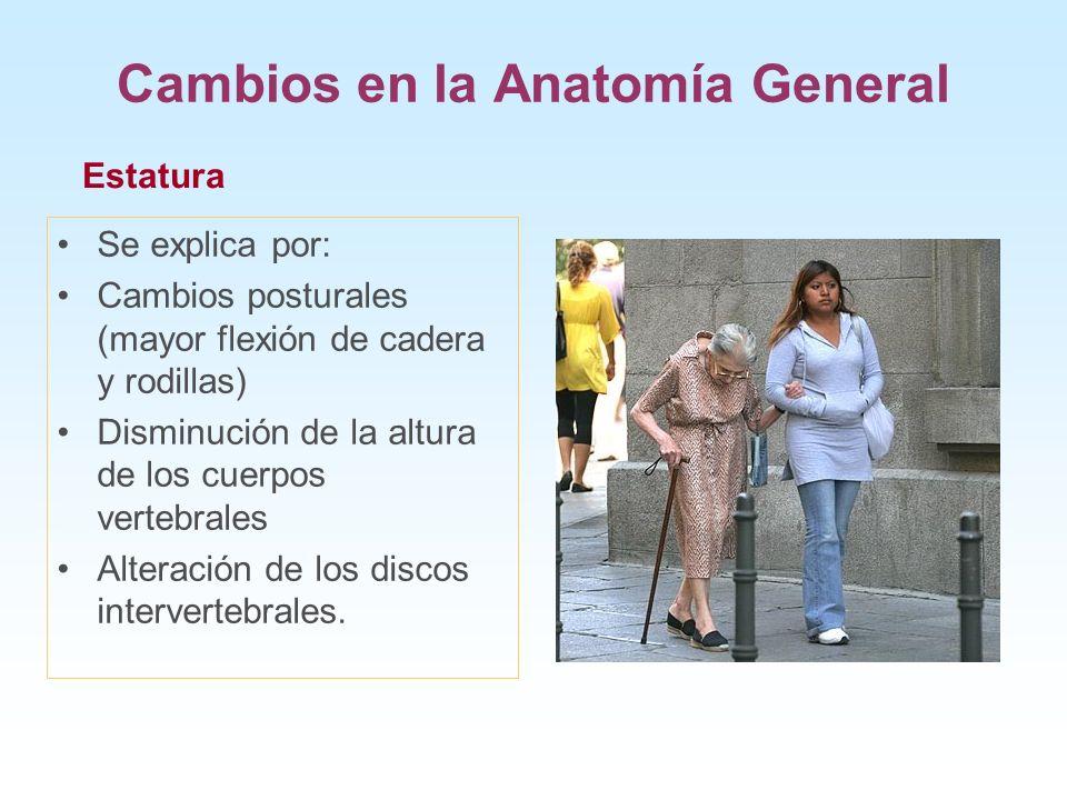Cambios en la Anatomía General