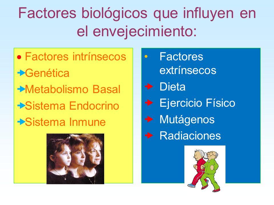 Factores biológicos que influyen en el envejecimiento: