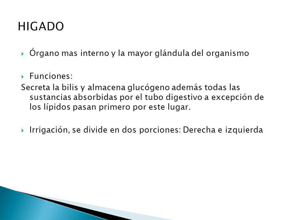 HIGADO Órgano mas interno y la mayor glándula del organismo Funciones: