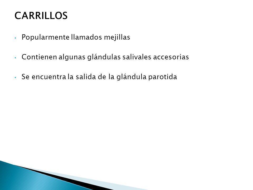 CARRILLOS Popularmente llamados mejillas