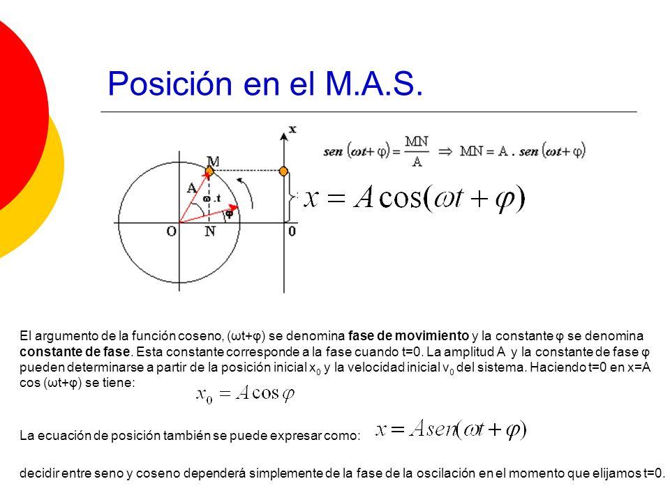 Posición en el M.A.S.