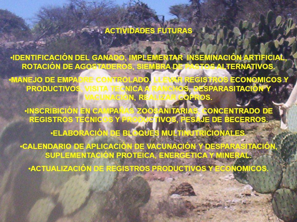 ELABORACIÓN DE BLOQUES MULTINUTRICIONALES.