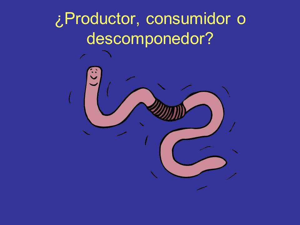 ¿Productor, consumidor o descomponedor