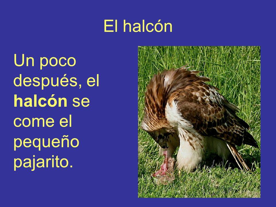 El halcón Un poco después, el halcón se come el pequeño pajarito.