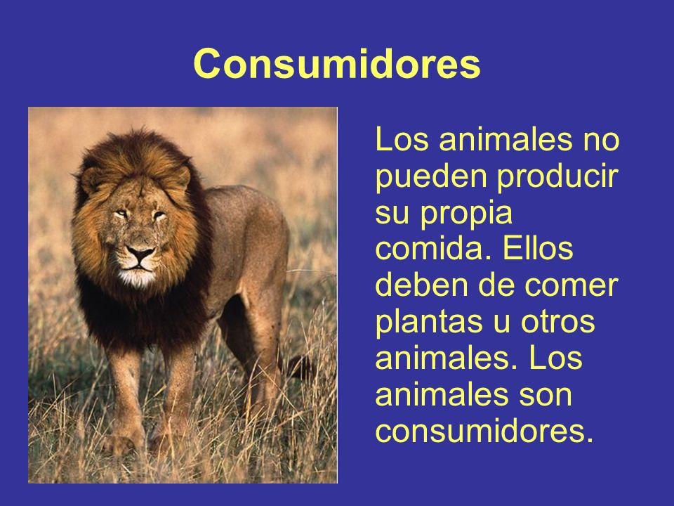 Consumidores Los animales no pueden producir su propia comida.