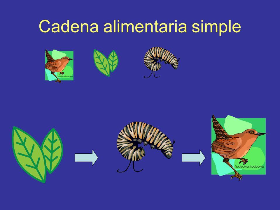 Cadena alimentaria simple