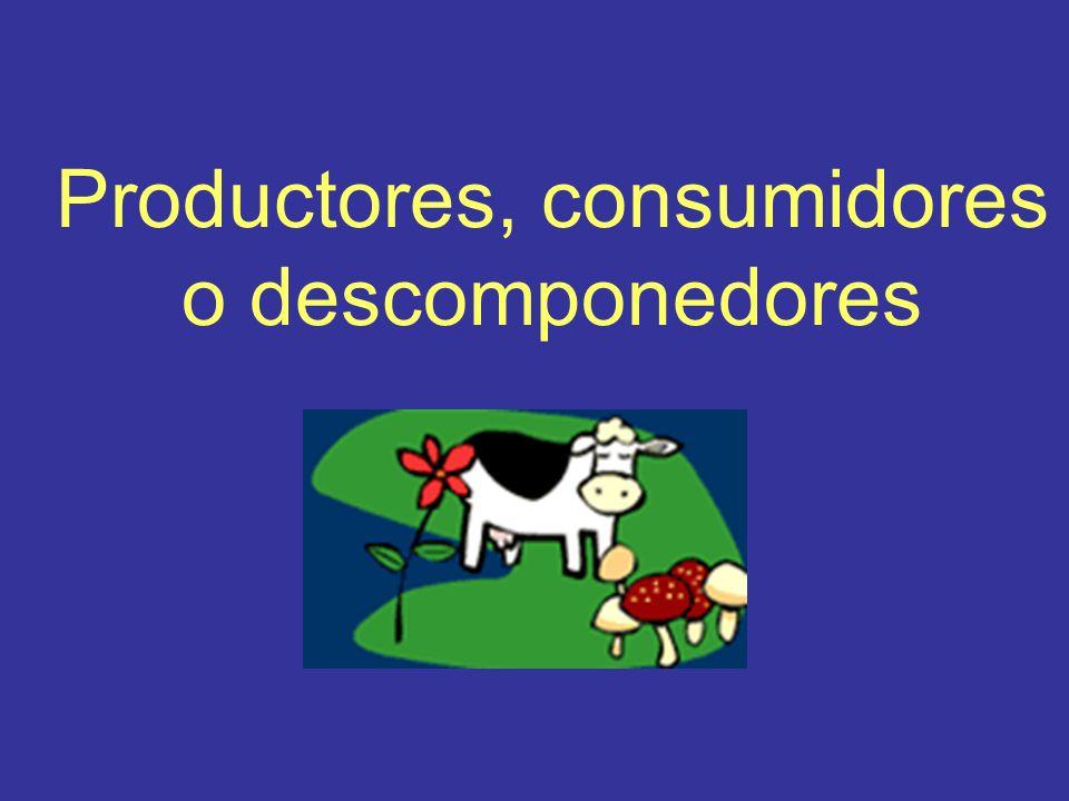 Productores, consumidores o descomponedores
