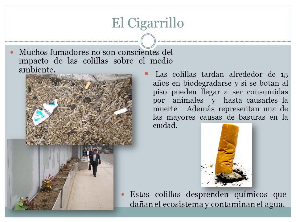 El Cigarrillo Muchos fumadores no son conscientes del impacto de las colillas sobre el medio ambiente.