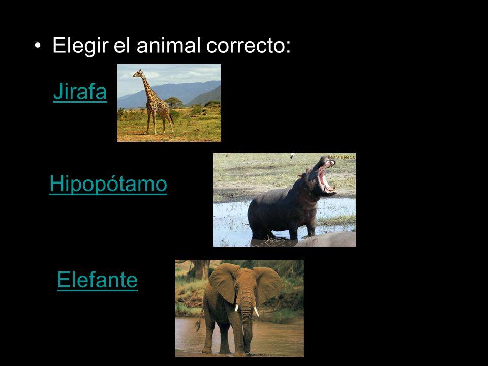 Elegir el animal correcto: