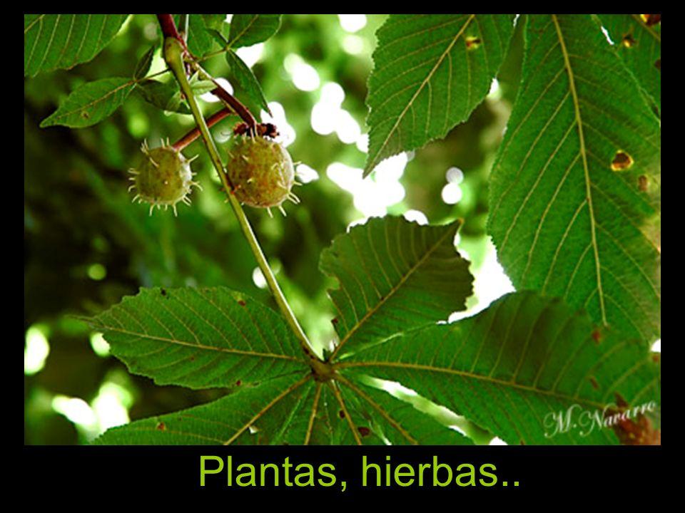 Plantas, hierbas..