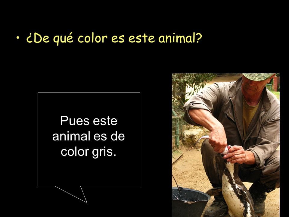 Pues este animal es de color gris.