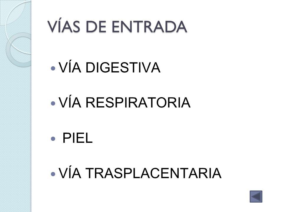 VÍAS DE ENTRADA VÍA DIGESTIVA VÍA RESPIRATORIA PIEL