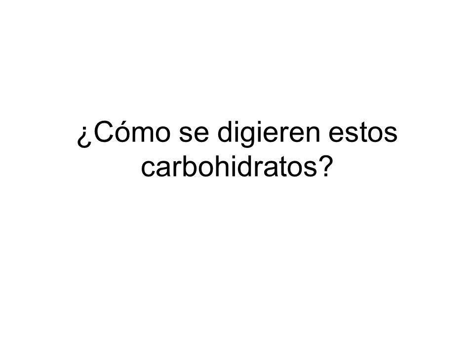 ¿Cómo se digieren estos carbohidratos