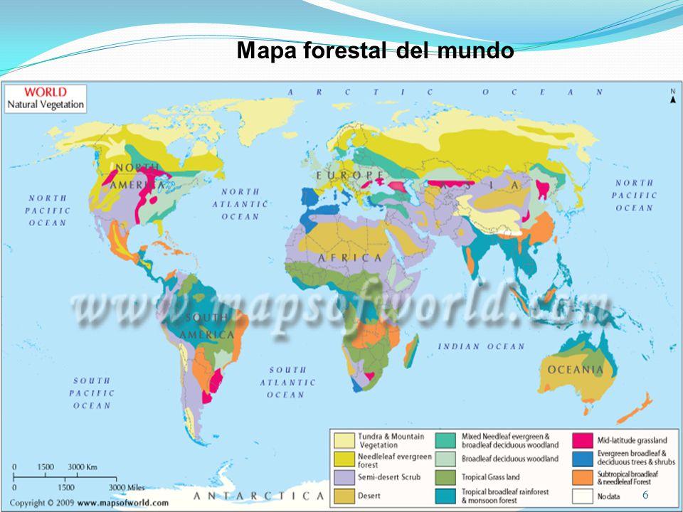 Mapa forestal del mundo