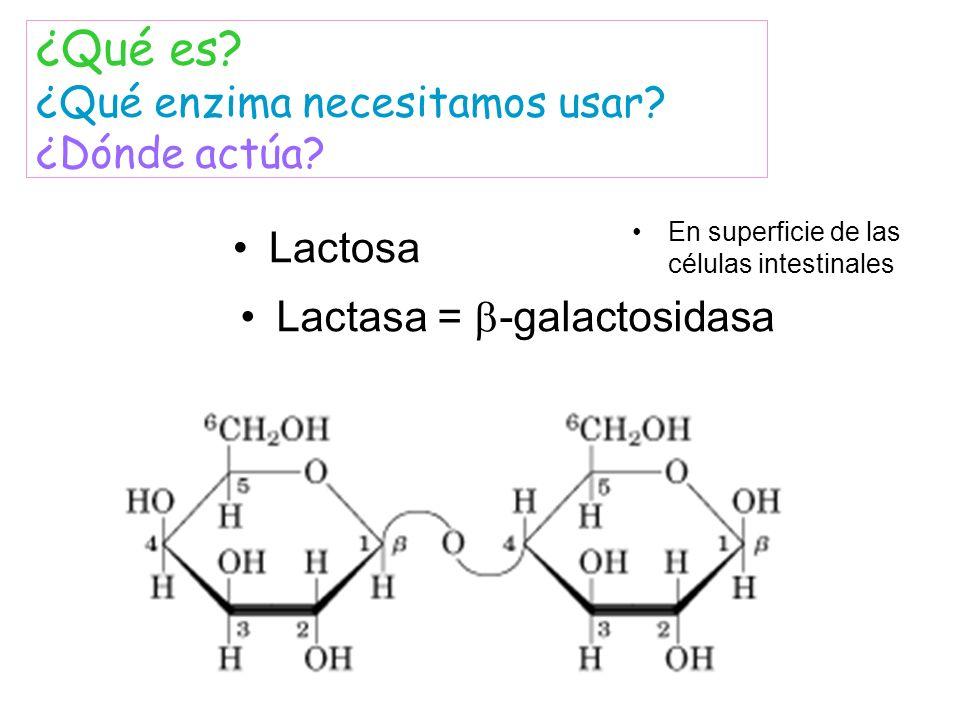 ¿Qué es ¿Qué enzima necesitamos usar ¿Dónde actúa