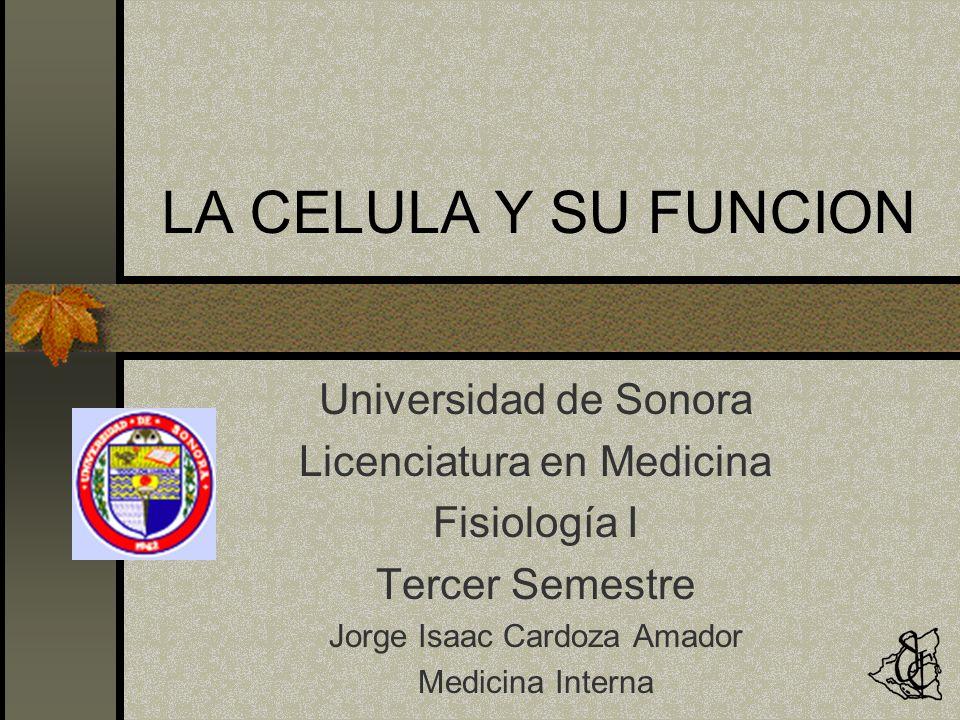 LA CELULA Y SU FUNCION Universidad de Sonora Licenciatura en Medicina