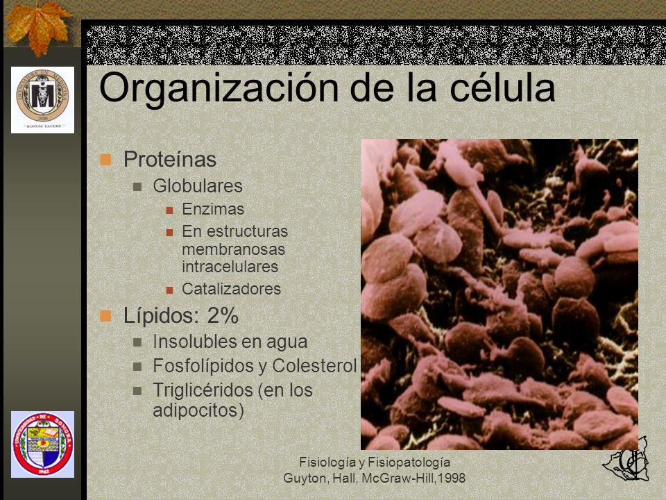 Organización de la célula