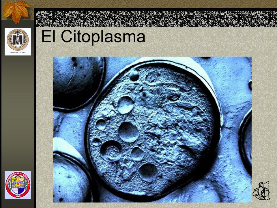 El Citoplasma Fisiología y Fisiopatología