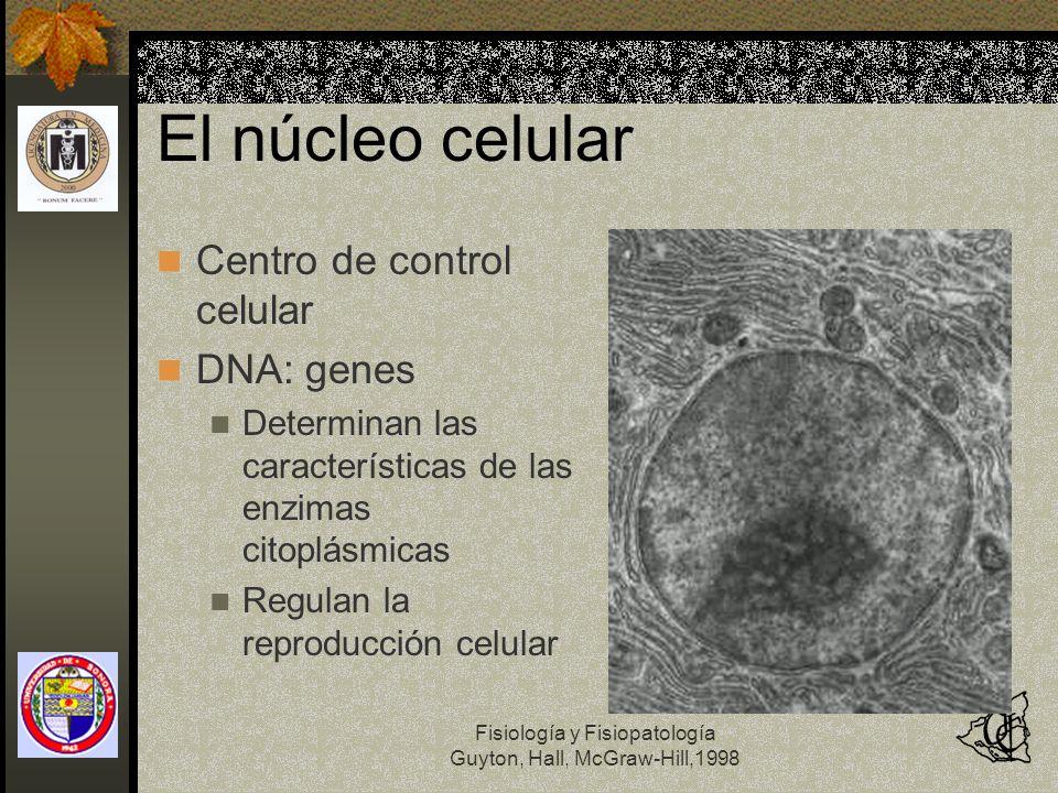El núcleo celular Centro de control celular DNA: genes