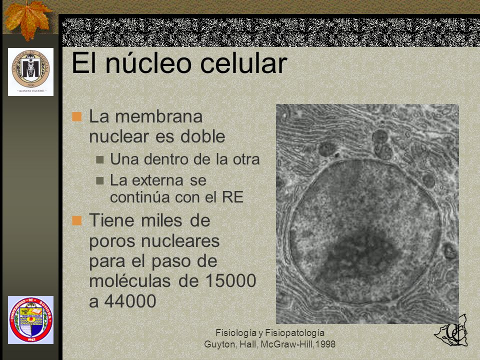 El núcleo celular La membrana nuclear es doble