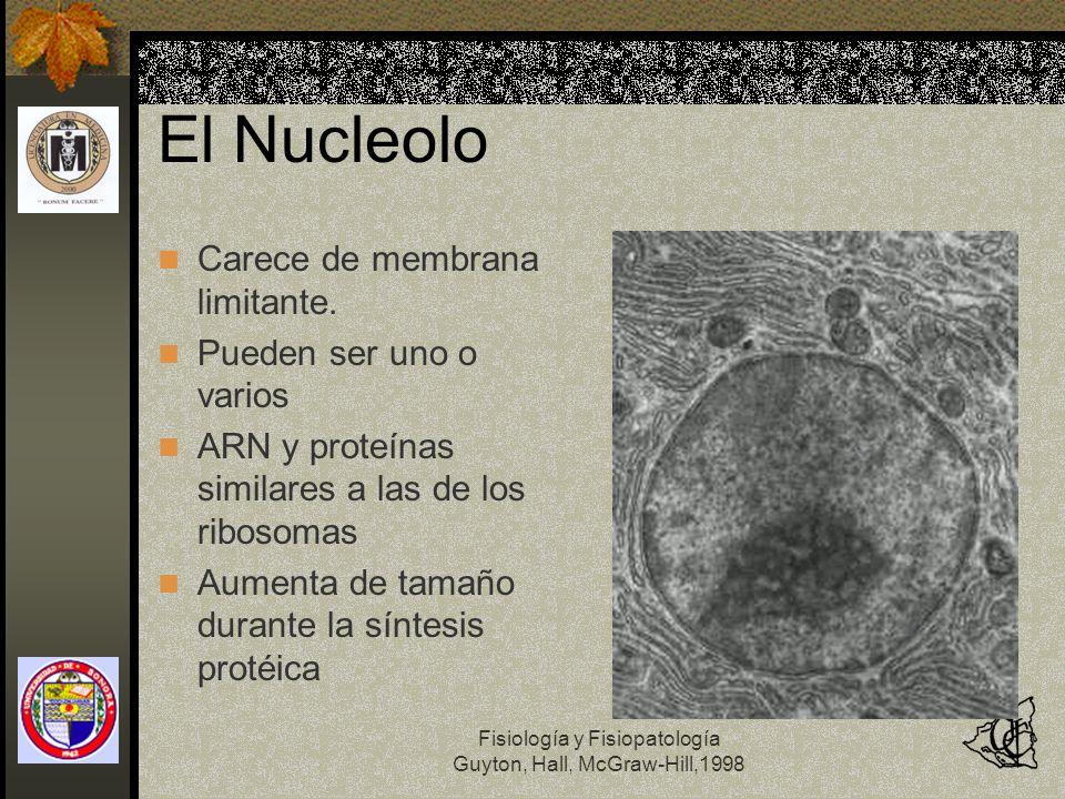 El Nucleolo Carece de membrana limitante. Pueden ser uno o varios