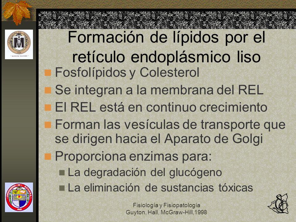Formación de lípidos por el retículo endoplásmico liso