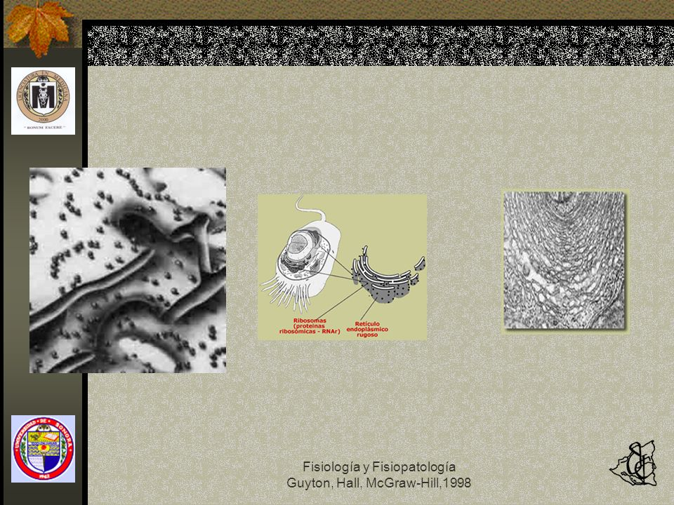 Fisiología y Fisiopatología Guyton, Hall, McGraw-Hill,1998