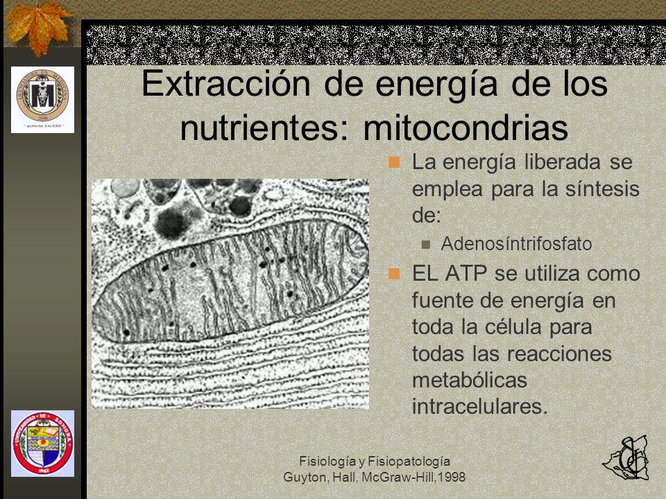 Extracción de energía de los nutrientes: mitocondrias
