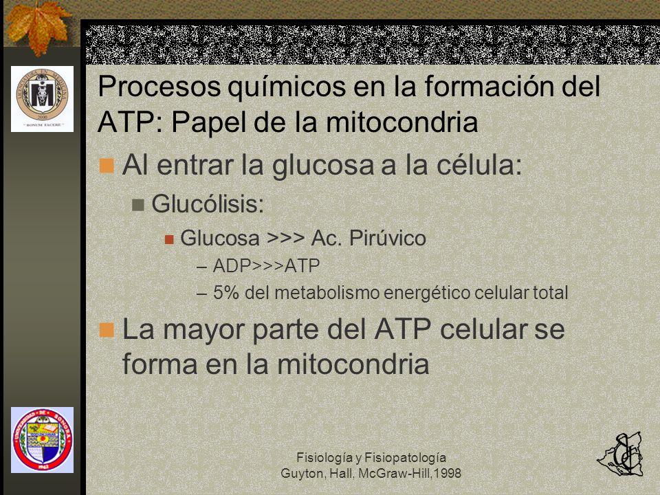 Procesos químicos en la formación del ATP: Papel de la mitocondria