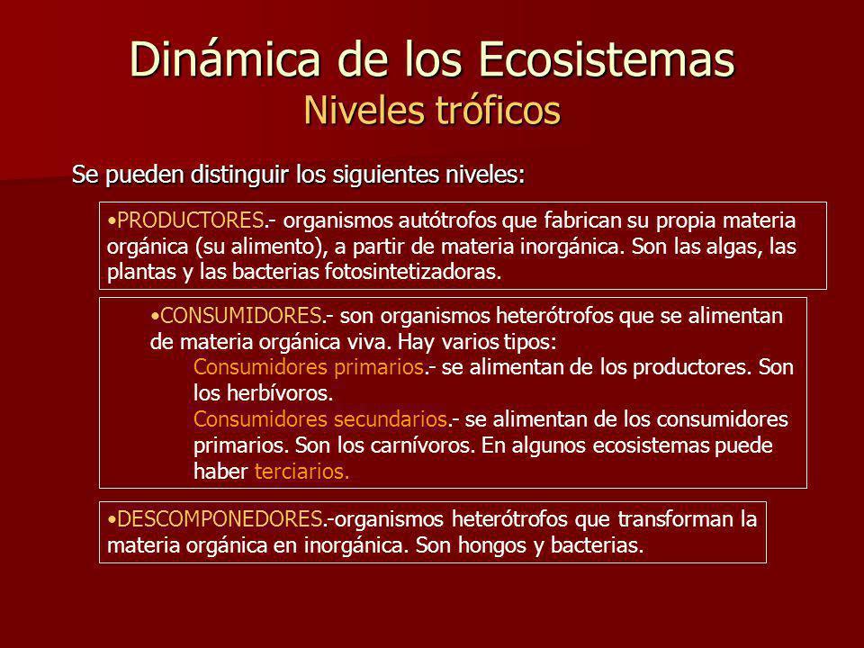 Dinámica de los Ecosistemas Niveles tróficos