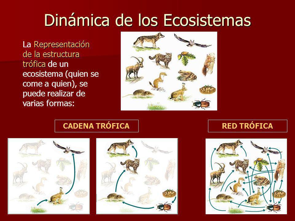 Dinámica de los Ecosistemas