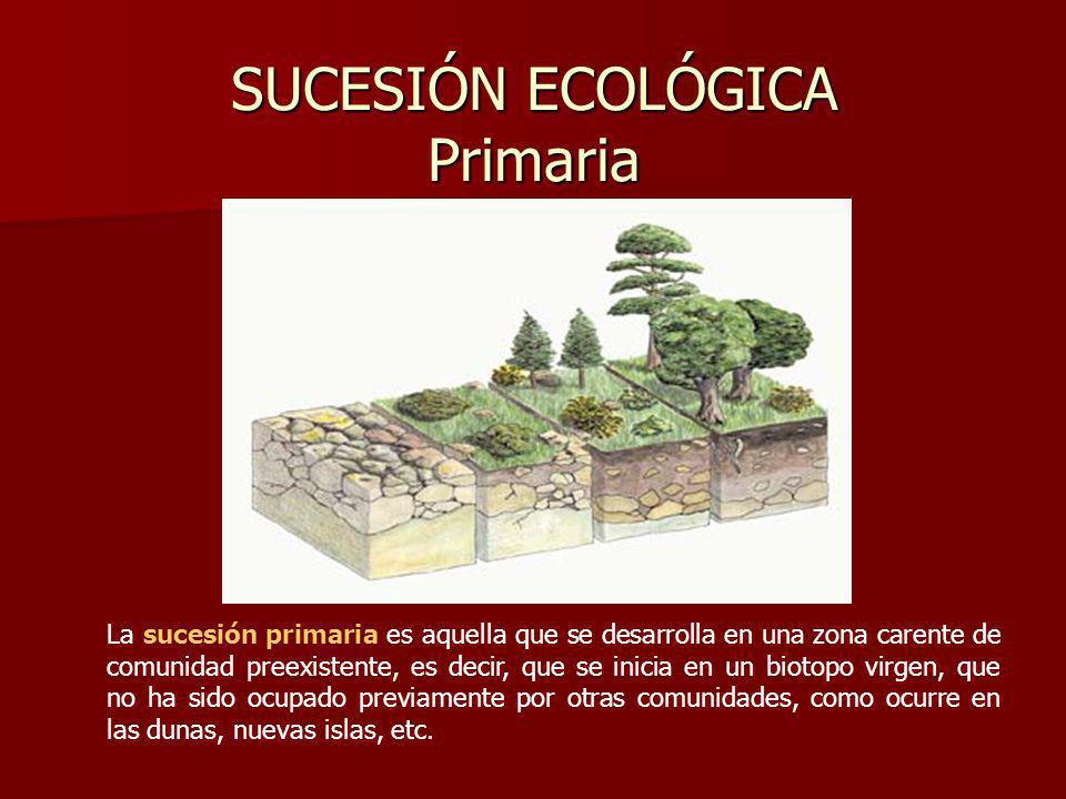 SUCESIÓN ECOLÓGICA Primaria