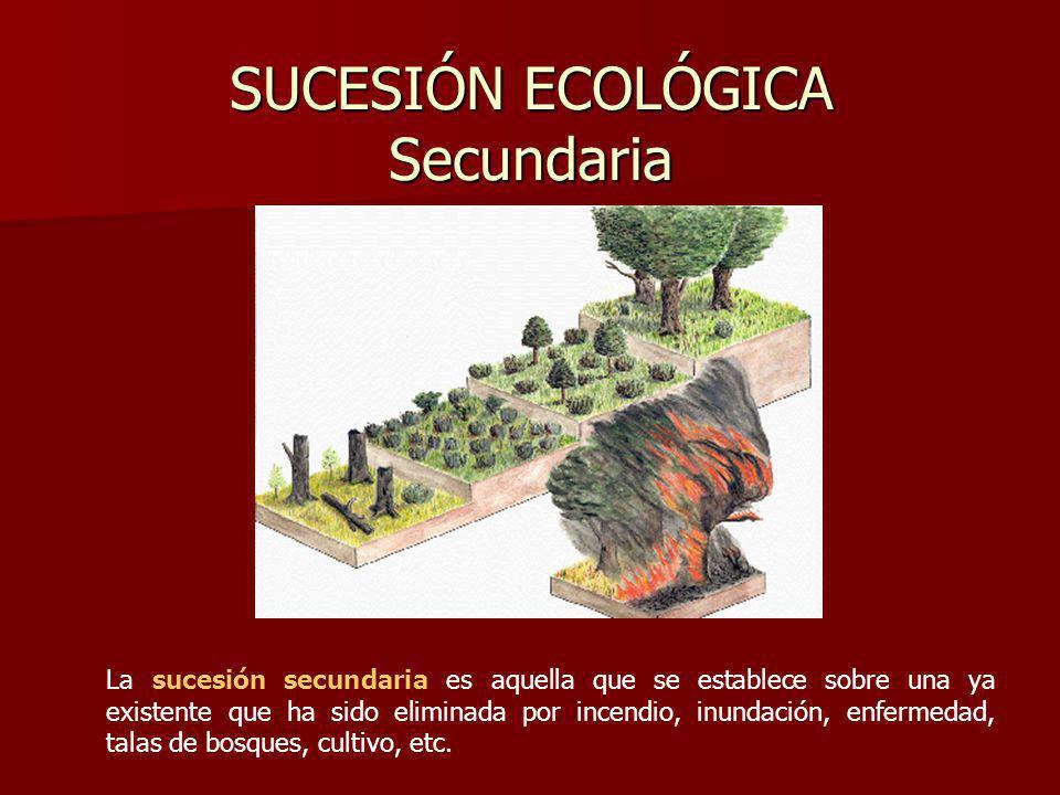 SUCESIÓN ECOLÓGICA Secundaria
