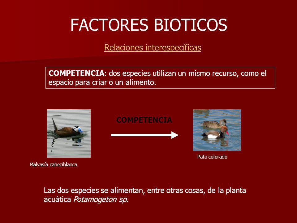 FACTORES BIOTICOS Relaciones interespecíficas