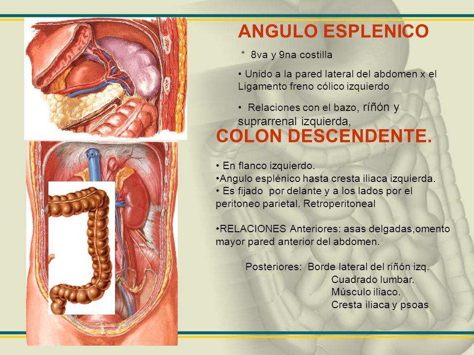 Dorable Anatomía ángulo Sinodural Colección - Anatomía de Las ...