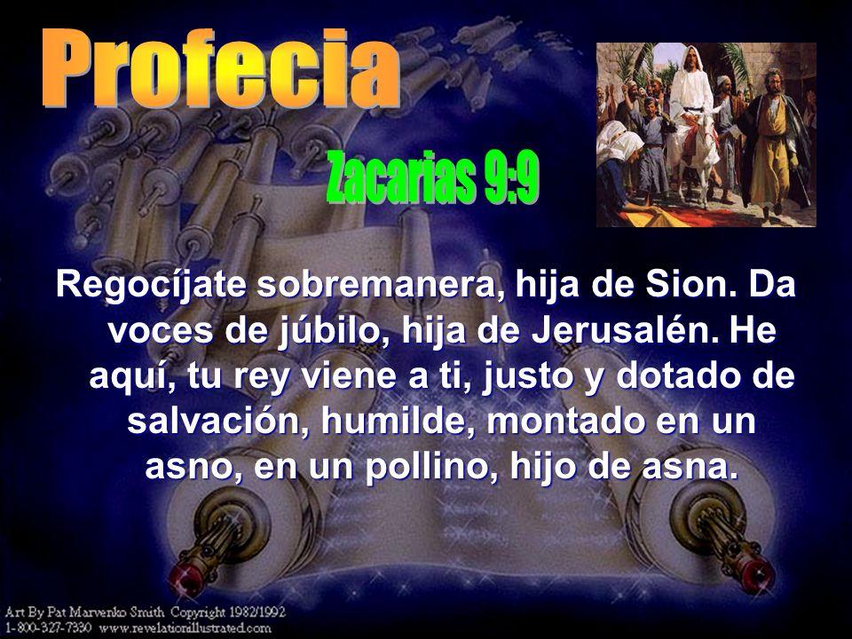 Profecia Zacarias 9:9.