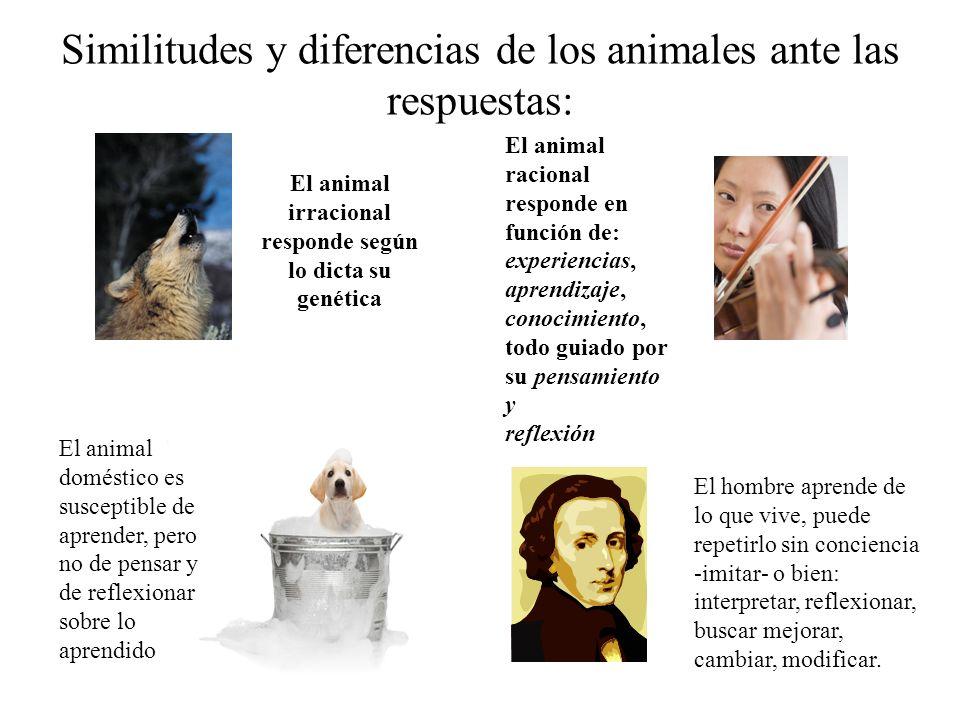 Similitudes y diferencias de los animales ante las respuestas: