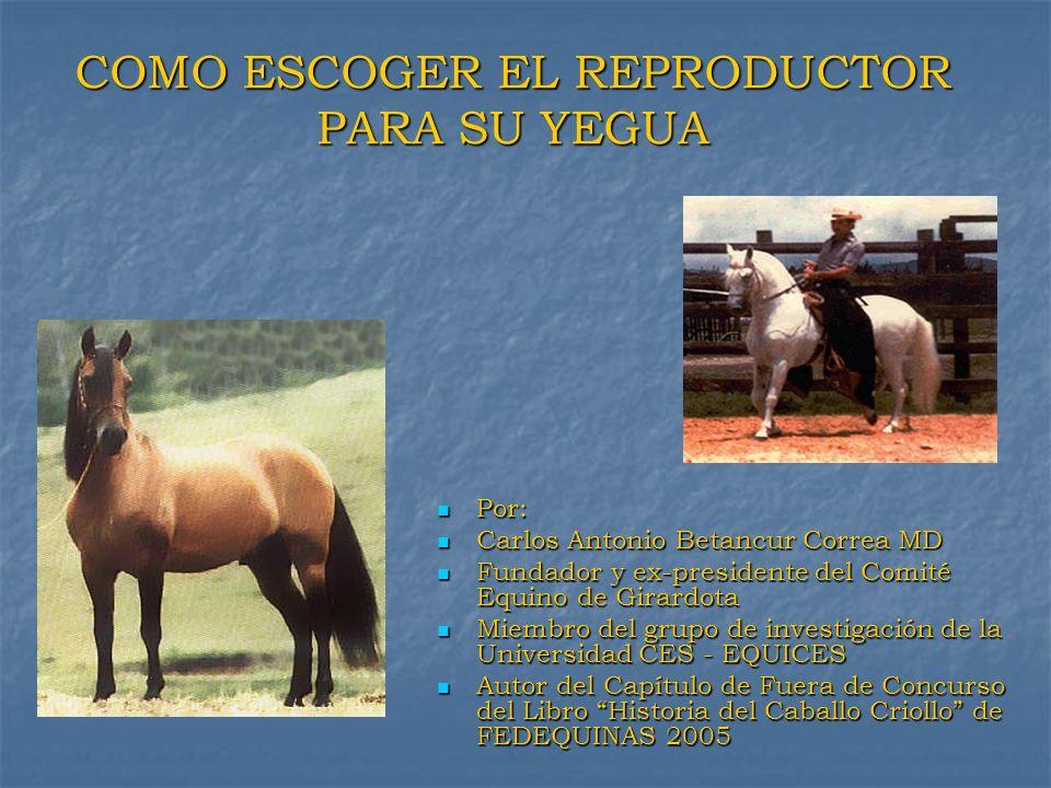 COMO ESCOGER EL REPRODUCTOR PARA SU YEGUA