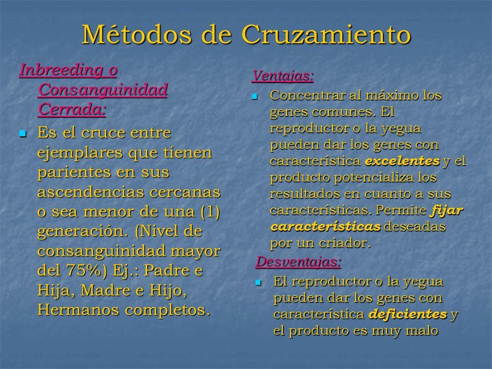 Métodos de Cruzamiento