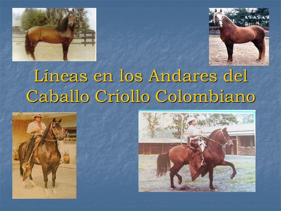 Líneas en los Andares del Caballo Criollo Colombiano