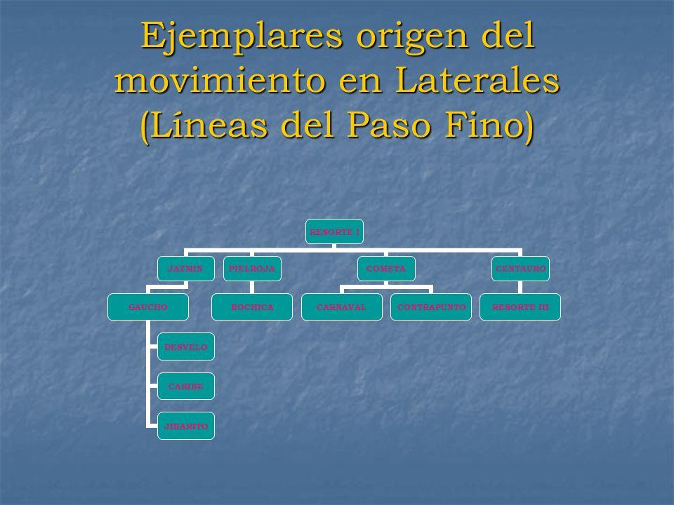 Ejemplares origen del movimiento en Laterales (Líneas del Paso Fino)