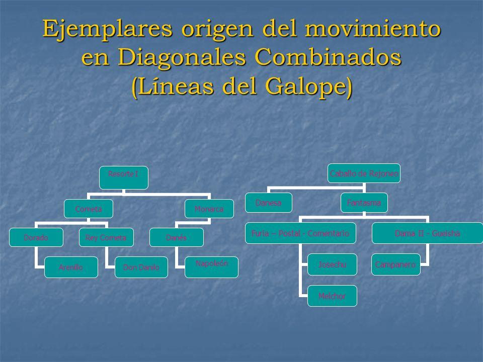 Ejemplares origen del movimiento en Diagonales Combinados (Líneas del Galope)