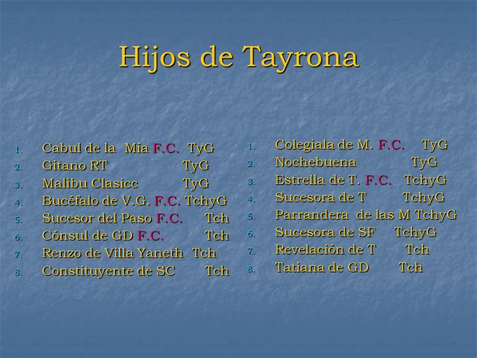 Hijos de Tayrona Colegiala de M. F.C. TyG Cabul de la Mía F.C. TyG