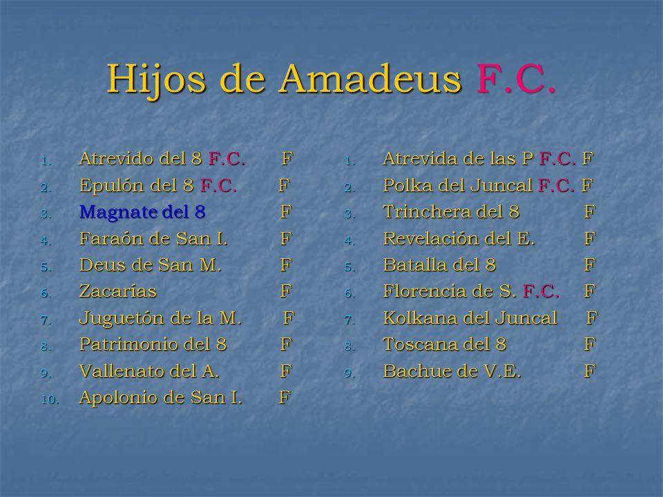 Hijos de Amadeus F.C. Atrevido del 8 F.C. F Epulón del 8 F.C. F