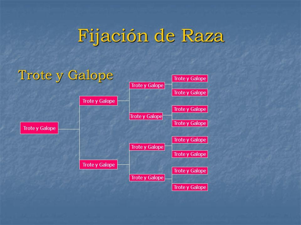 Fijación de Raza Trote y Galope Trote y Galope Trote y Galope